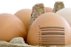 Bisnis telur ayam