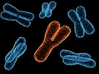Melalui proses pemusingan sel sperma Y akan terpisah dari sperma X yang memiliki bobot lebih berat