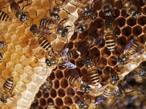 madu adalah obat paling mujarab