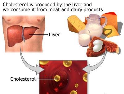 Di dalam tubuh, kolesterol mempunyai fungsi penting