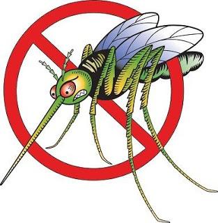 Tips Sederhana Cara Menghilangkan Nyamuk