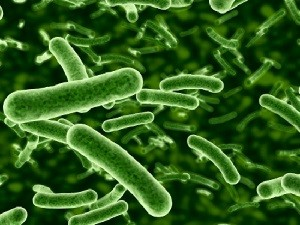 Tips Mengatasi Perasaan Tidak Enak dengan Probiotik